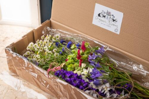 Pick of the garden flower subscription
