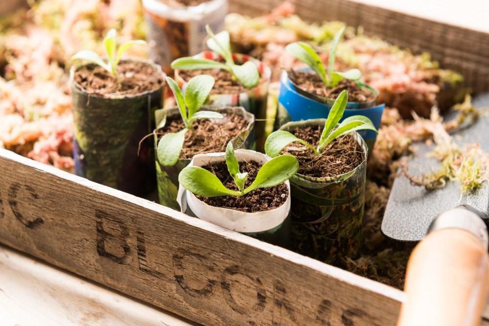 Annual Plug Plants