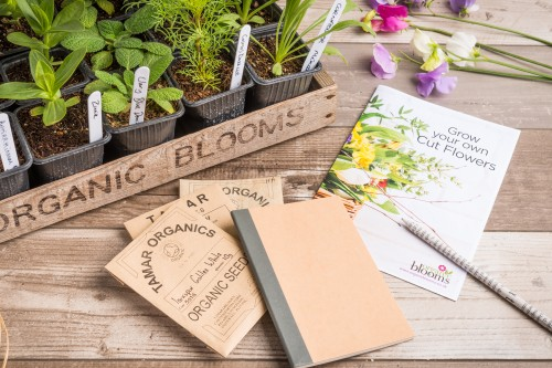 Grow your own cut flower business