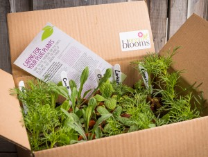 Boxed Organic Blooms plug plants