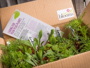 Plug plants from Organic Blooms for delivery