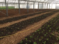 Practical horticulture at Organic Blooms