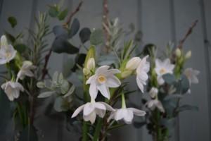 Organic Pretty Posies: scented winter paperwhites